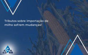 Tributos Sobre Importacao De Milho Sofrem Mudancas Gcy Contabil - GCY Contabilidade